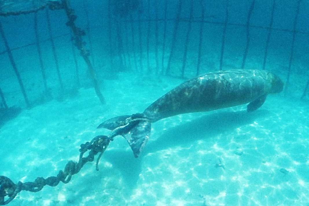 underwater jails for whales
