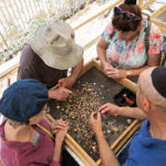Temple Mount Sifting Project