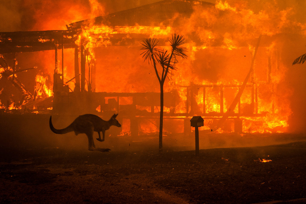 A kangaroo rushes past a burning house in Lake Conjola on Dec. 31, 2019. Matthew Abbott—The New York Times/Redux