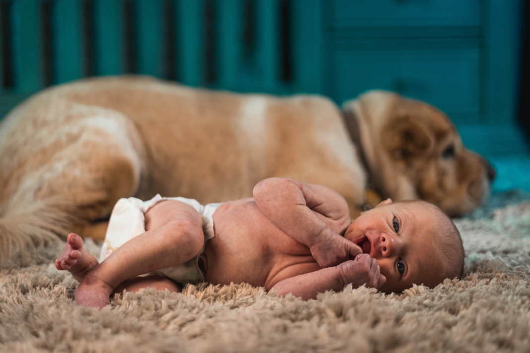 Little boy and Dog